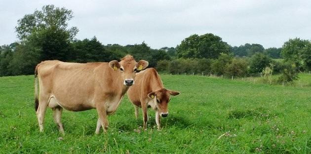 Das »landgrabbing« der deutschen Landwirtschaft